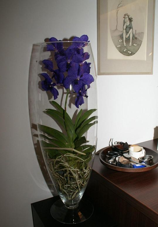 Ozdobou bytu je orchidej jménem Vanda, která přežívá bez rašeliny.