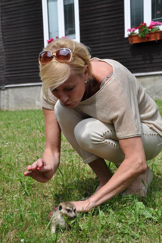 Renata s malým samečkem surikaty, kterého musela krmit červy.