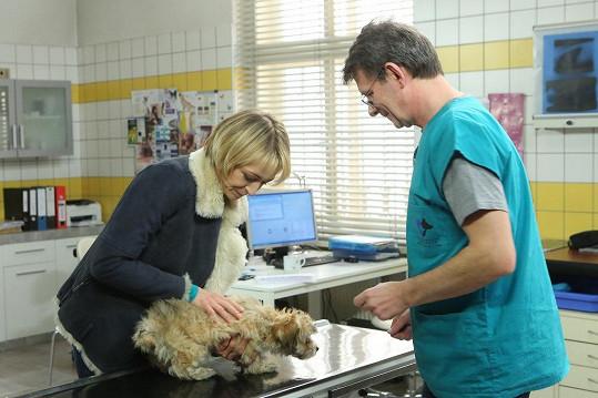 Coby veterinářka bude mít hodně blízko k Janu Šťastnému.