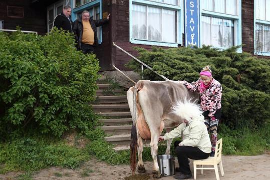 Bob Klepl dojil v seriálu Přístav krávu.