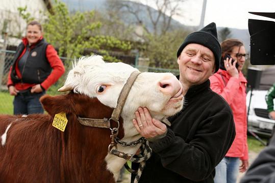 Také Petr Čtvrtníček se s kravičkou pomazlil.