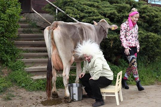 Kráva na něj hodila lejno.