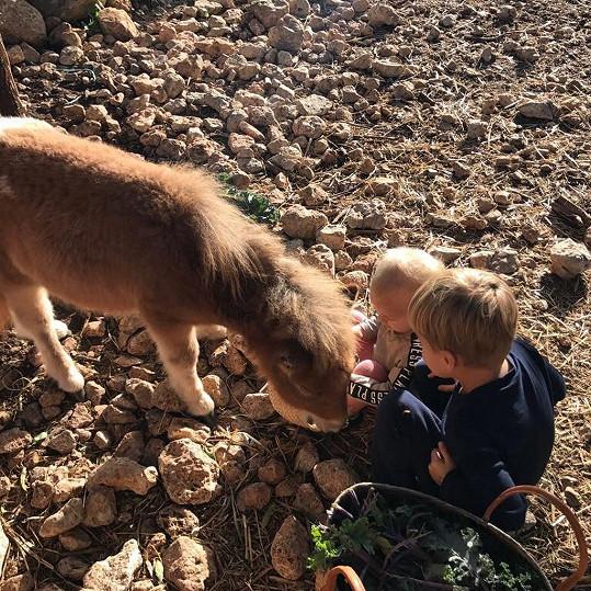Na Mallorce pěstuje zeleninu, olivy a chová zvířata.