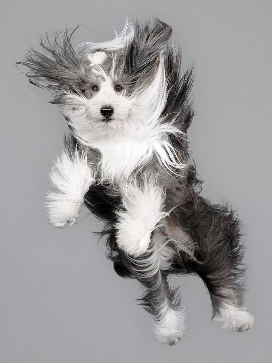 Dynamický pohyb dělá se psy divy.