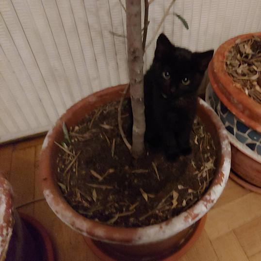 pěkná černá kočička videalesbický prst kurva stříkat