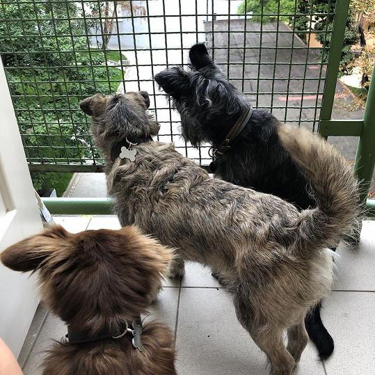 Marta Jandová už má doma pejsky tři. Nedávno totiž zachránila z útulku fenku (vlevo).