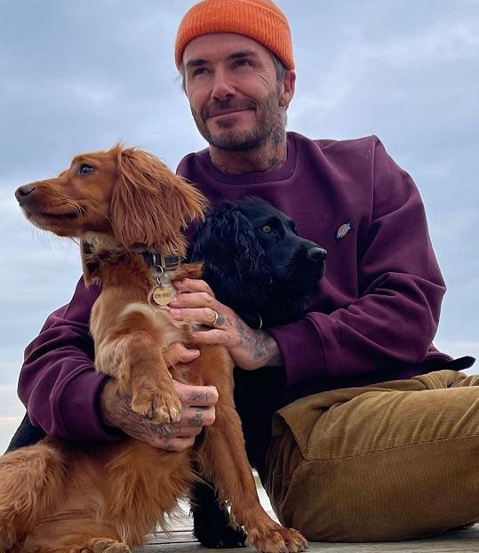 V popředí nejmladší Sage, kterou si Beckhamovi pořídili k Vánocům roku 2019.