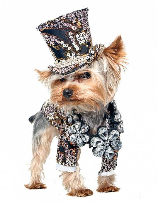 Luxusní model pro psí gentlemany