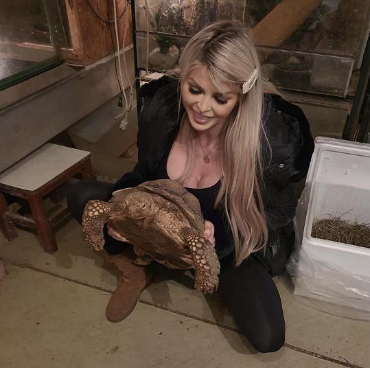 Mají nový zvířecí přírůstek - želvu, která dostala jméno Prcek.
