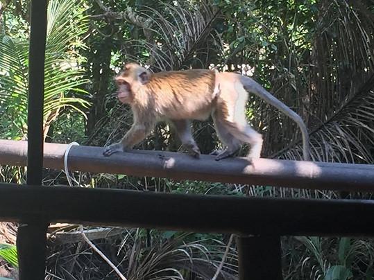 """Tahle """"roztomilá"""" opička zpěváka pokousala."""