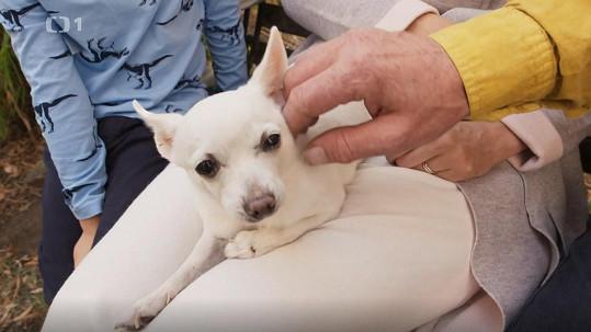 Milovaná Mia odešla v prosinci do psího nebe.