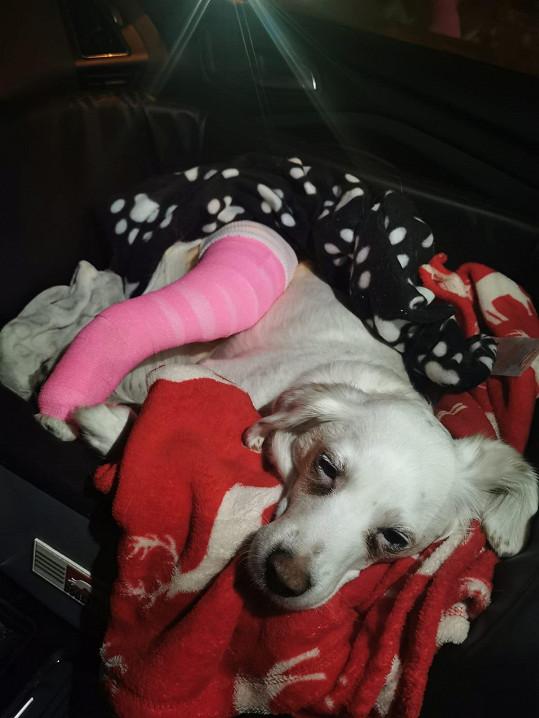 Lilly má za sebou operaci. Zvládla to skvěle.