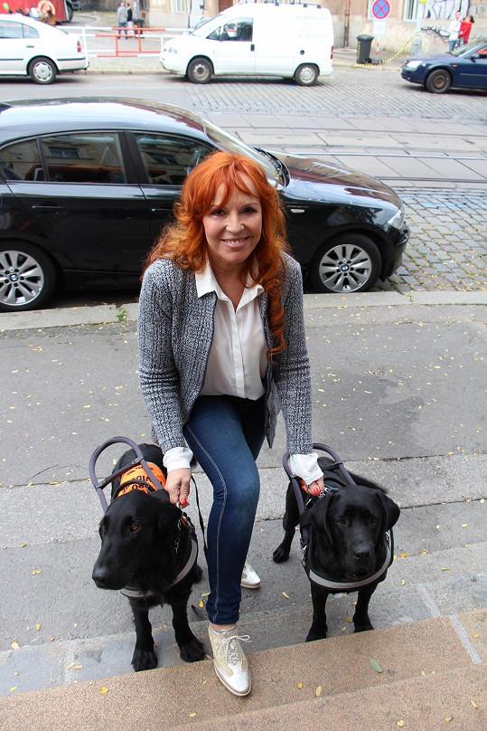Marcela je velká milovnice psů.
