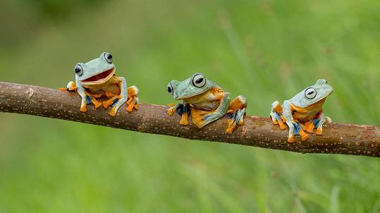 Tato žabí partička vám zvedne náladu.