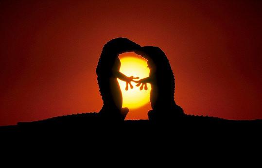 Ještěrčí romantika při západu slunce.