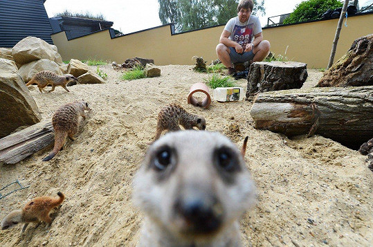 I surikata chce fotku.