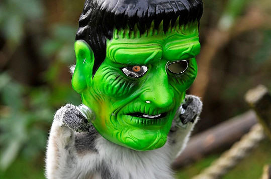 Také lemur vypadá v halloweenské masce strašidelně.