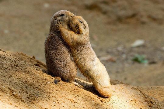 Psouny spojuje láska.