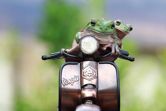 Žáby pózovaly na modelu skútru.