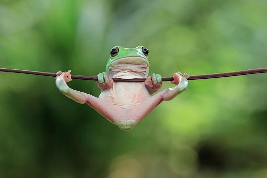 Tato žába vyvádí psí kusy.