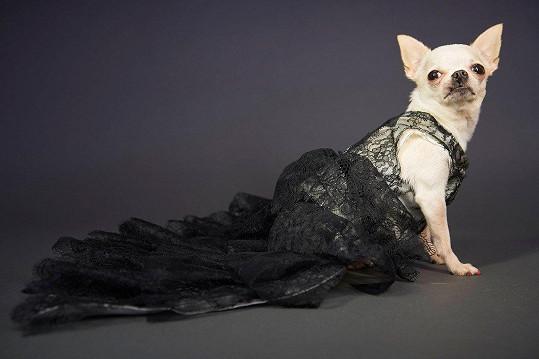 I tyto černé šaty může vynést vaše čivava.