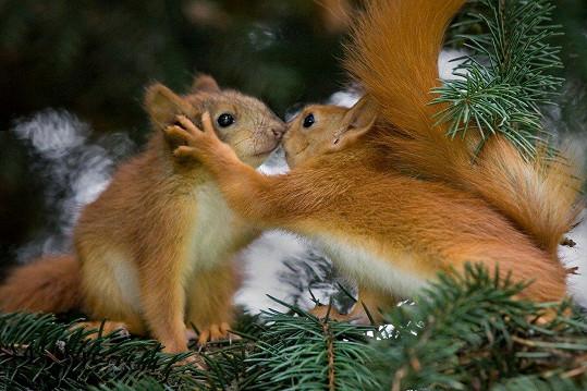 Veverky ví, že láska hřeje.