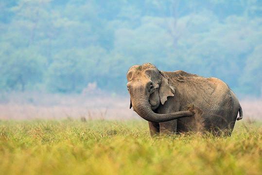 Nejdříve to byl obyčejný slon.