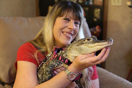 A tady aligátor