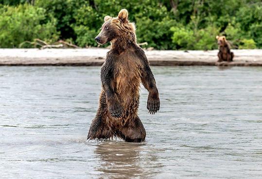 Medvěd z Kamčatky se stal objektem zájmu italského fotografa.