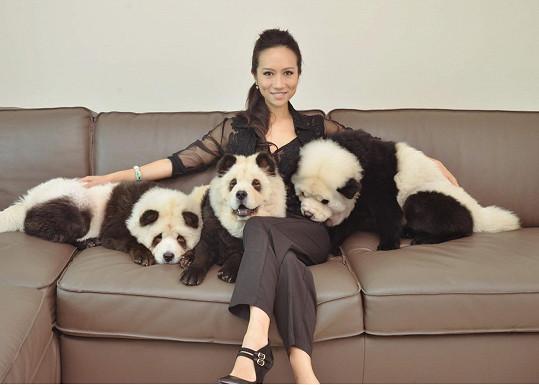 Psi byli původně čistě bílí.