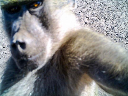 Stejně tak opice.