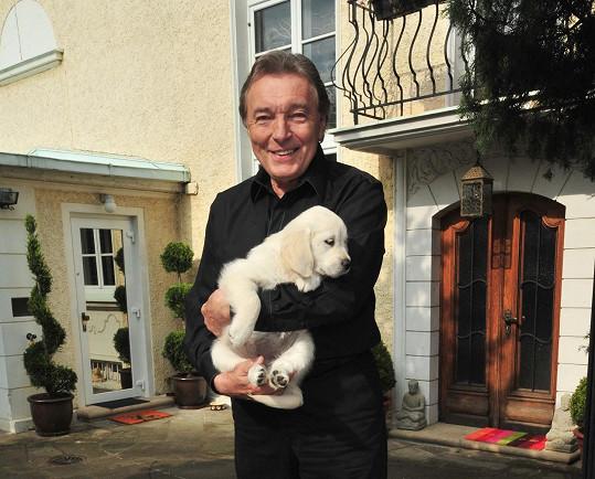 Karel Gott s fenkou Stellou v době, kdy ještě byla štěňátko (2010).