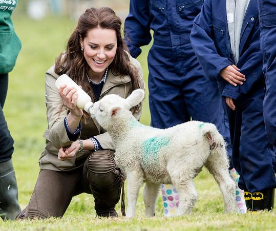 Vévodkyně Kate navštívila farmu.