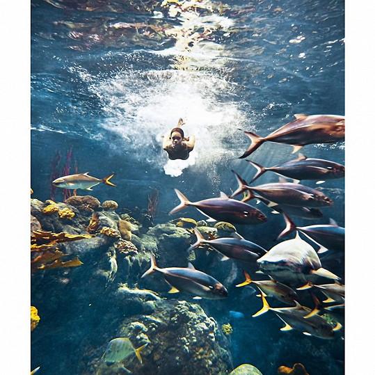 V obrovském akváriu vznikly úžasné fotografie.