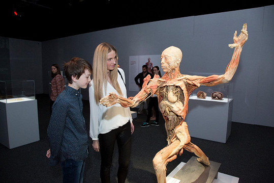Na výstavě exponátů z lidských těl