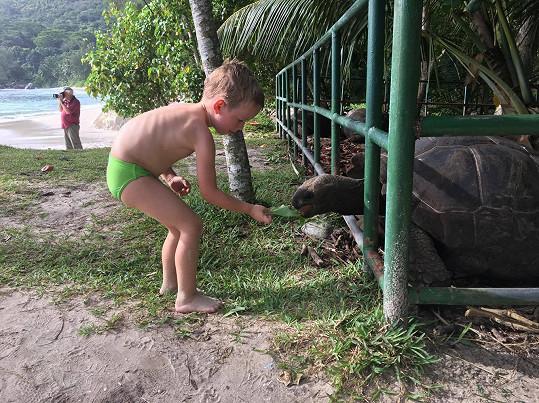 Synové Míša a Franta krmili želvy velkými listy.