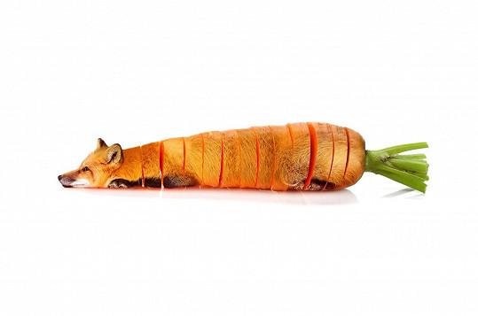 Mrkev přetvořená v lišku