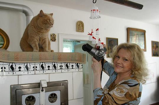 Na chalupě nesmí chybět kočičí miláček.