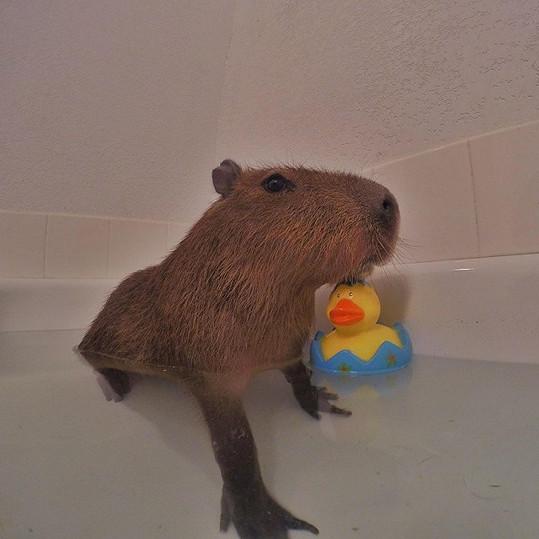 JoeJoe miluje koupání ve vaně.