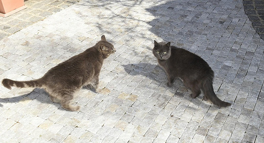 Dvě kočky si u nich domov našly samy.