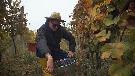 Vyrábět víno by se Kazmovi líbilo. Nebýt pavouků.