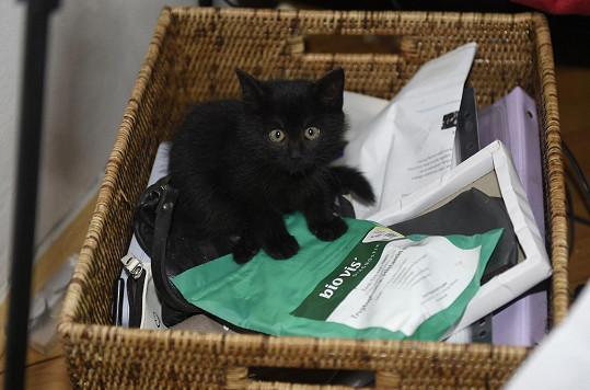 Její kamarád ho našel ve stodole a nahradilo její nejstarší kočičku, které zemřela.