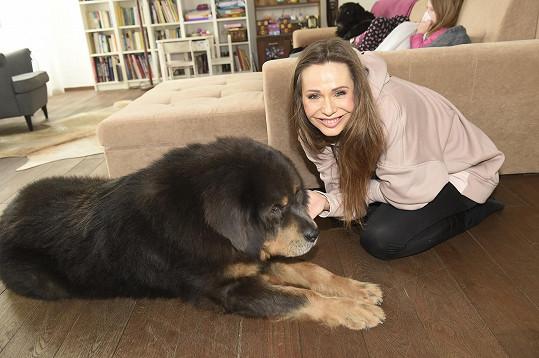 Obří tibetskou dogu Dogana si vzala do péče loni na podzim.