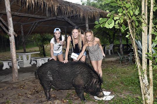 Zvířata prostě miluje. Míša se s kolegyněmi Luckou Duškovou (vpravo) a Kristýnou Kubíčkovou odvážila zapózovat s divokým prasetem, které finalistky potkaly na opuštěném ostrově Koh Samae San. Čuníkovi jedna z nich věnovala svůj oběd.