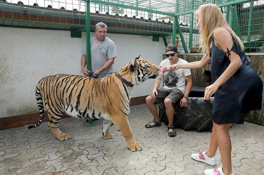A na řadu přišlo krmení tygra.