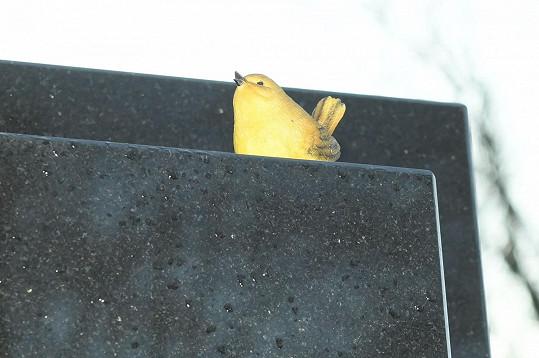 Z hrobu Karla Gotta na pražských Malvazinkách zmizel malý zlatý slavíček a další předměty.