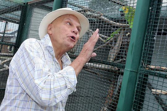 A když měl volnou chvilku, učil mluvit i papouška.