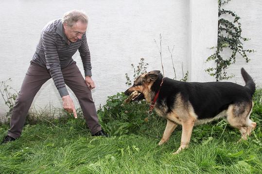 Karel Gott dováděl před dabingovým studiem s vlčákem Nerem.