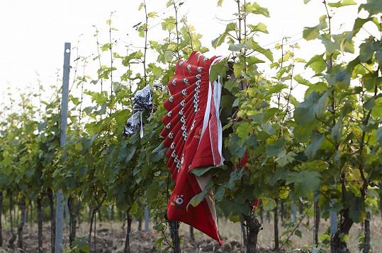 Kroj pověsili na vinohrad...