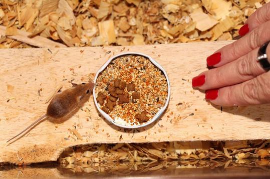 U zpěvačky mají svůj příbytek i nejmenší hlodavci na světě - myši africké.